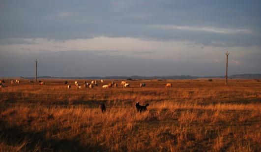 grazing-in-puszta
